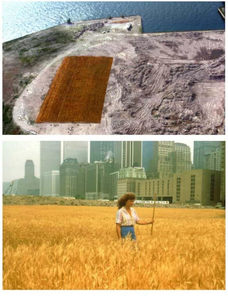 agnes-denes-wheatfield